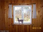 """Фото гостиницы для животных """"Питер Догс Отель"""" кот породы Сфинкс"""