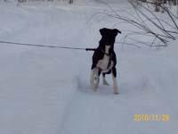 Гостиница для животных зимние прогулки